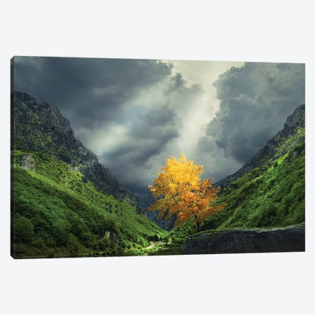 Tree Mountain Canvas Print #OXM4285} by Bess Hamiti Canvas Print