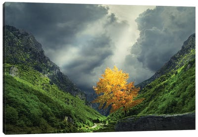 Tree Mountain Canvas Art Print
