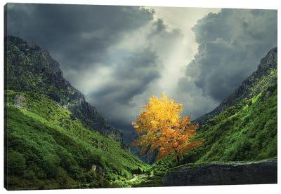 Tree Mountain Canvas Art Print