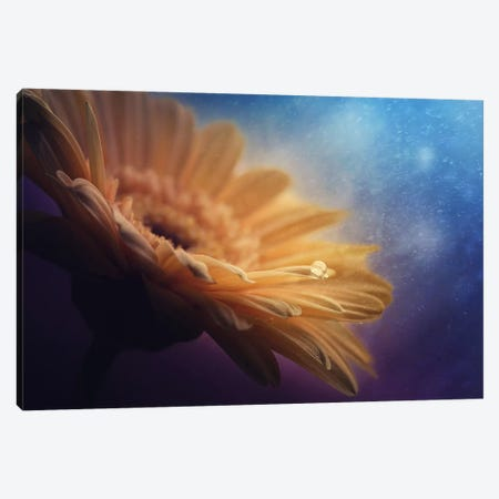 Universe Canvas Print #OXM42} by Pasztor Andras Art Print