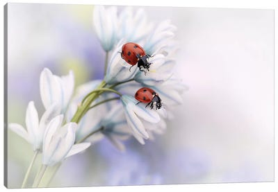 Ladybirds Canvas Art Print