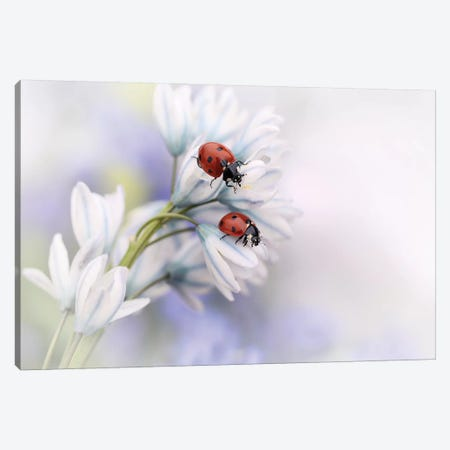 Ladybirds Canvas Print #OXM4317} by Ellen van Deelen Canvas Art Print