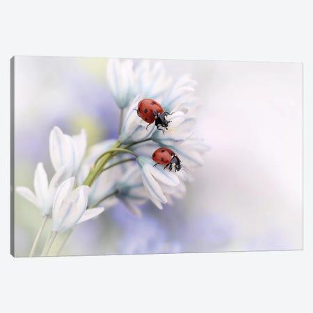 Ladybirds Canvas Print #OXM4317} by Ellen van Deelen Canvas Art Print