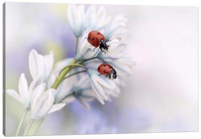 Ladybirds Canvas Art Print