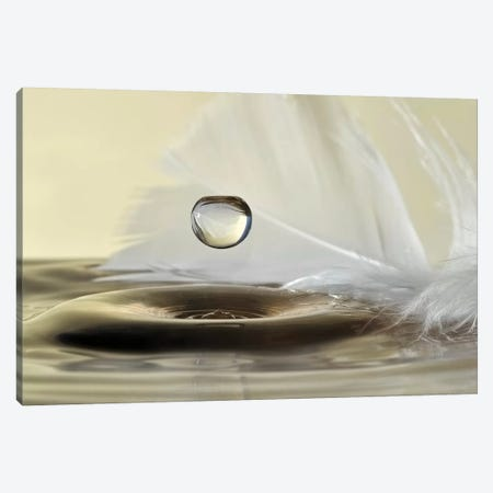 Feathers Drop Canvas Print #OXM4331} by Heidi Westum Canvas Artwork