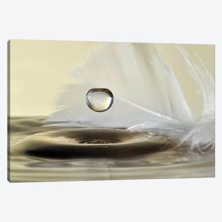 Feathers Drop Canvas Print #OXM4331} by Heidi Westum Canvas Artwork
