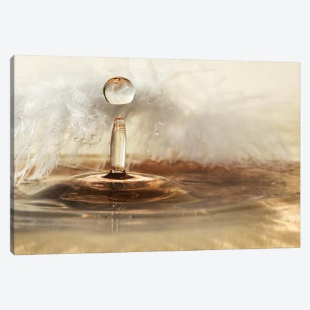 Golden Featherdrops Canvas Print #OXM4332} by Heidi Westum Canvas Art