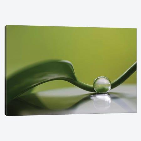 Green Harmony Canvas Print #OXM4333} by Heidi Westum Canvas Artwork