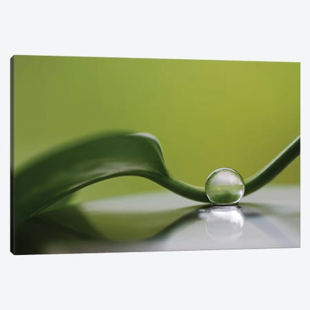 Green Harmony Canvas Print #OXM4333} by Heidi Westum Canvas Artwork