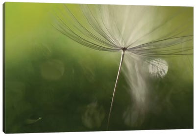 Shadows In The Green Canvas Art Print