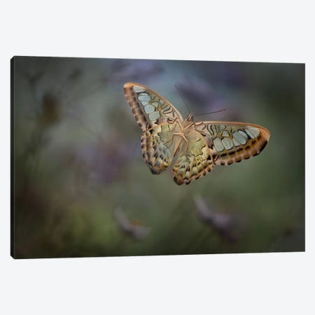 Landing II Canvas Print #OXM434} by Heather Bonadio Canvas Artwork