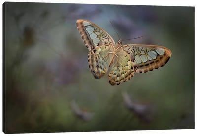 Landing II Canvas Art Print