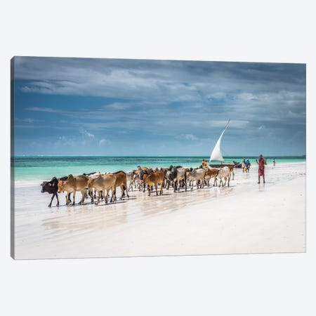 Masai Cattle On Zanzibar beach Canvas Print #OXM4356} by Jeffrey C. Sink Canvas Art Print