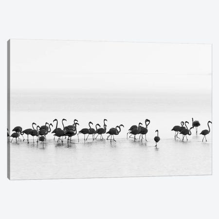 Flamingos Canvas Print #OXM4359} by Joan Gil Raga Canvas Art