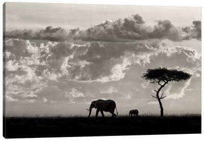 Silhouettes Of Mara Canvas Art Print