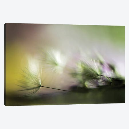 In The Morning 3-Piece Canvas #OXM4383} by Maryam Zahirimehr Art Print