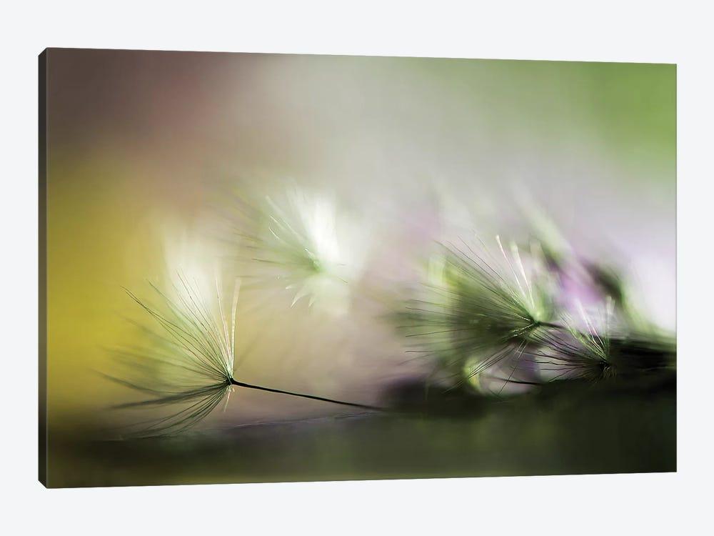 In The Morning by Maryam Zahirimehr 1-piece Canvas Artwork