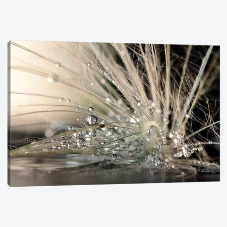 Pearls 3-Piece Canvas #OXM4384} by Maryam Zahirimehr Canvas Wall Art