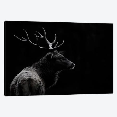 The Deer Soul Canvas Print #OXM4385} by Massimo Mei Canvas Artwork