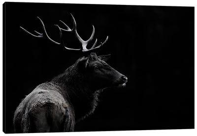 The Deer Soul Canvas Art Print