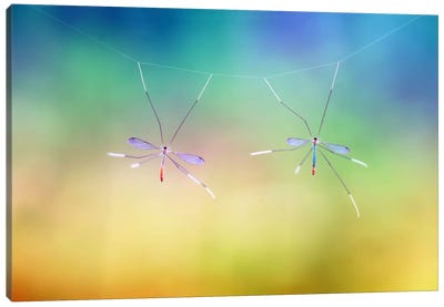 Hanging Together Canvas Art Print