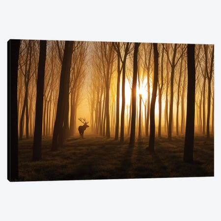 Once Upon A Time Canvas Print #OXM4396} by Nafets Norim Canvas Art Print