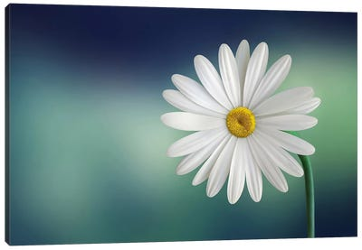 Flower Canvas Art Print
