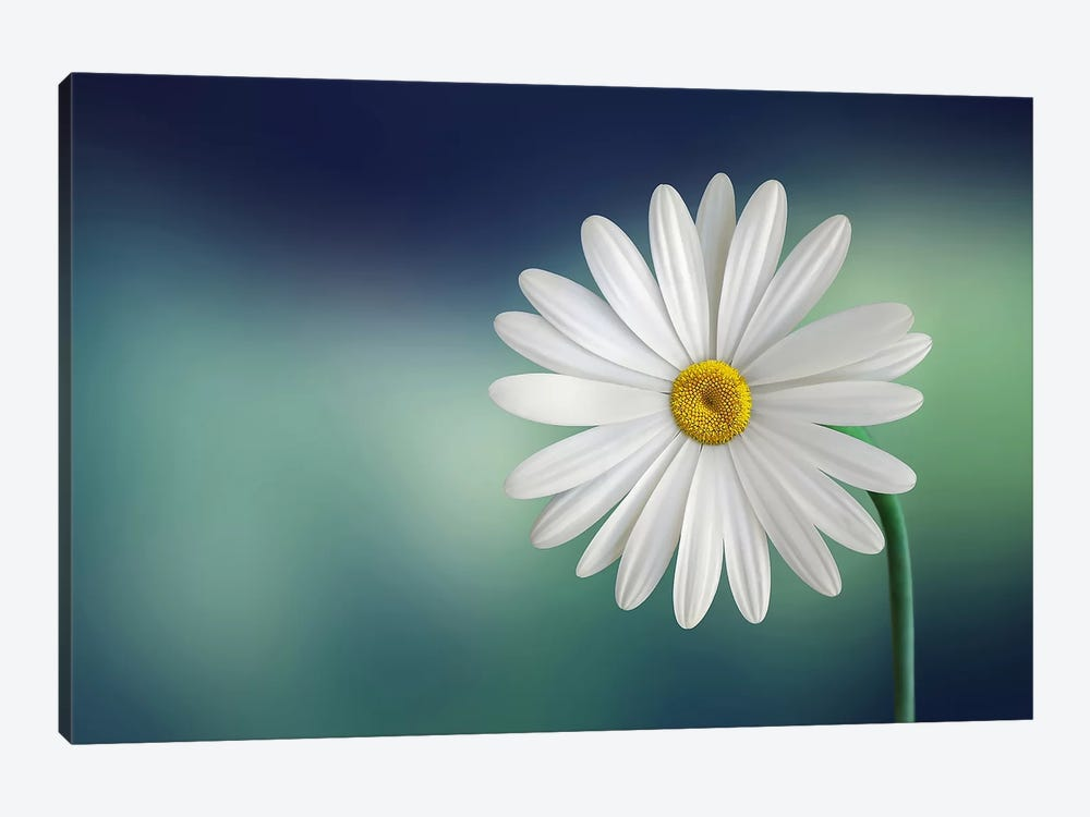 Flower by Bess Hamiti 1-piece Canvas Artwork