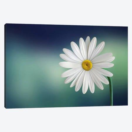 Flower Canvas Print #OXM439} by Bess Hamiti Canvas Print
