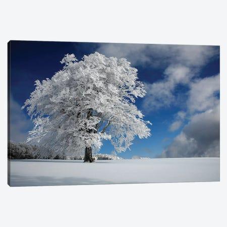 White Windbuche In Black Forest Canvas Print #OXM4402} by Nicolas Schumacher Canvas Wall Art