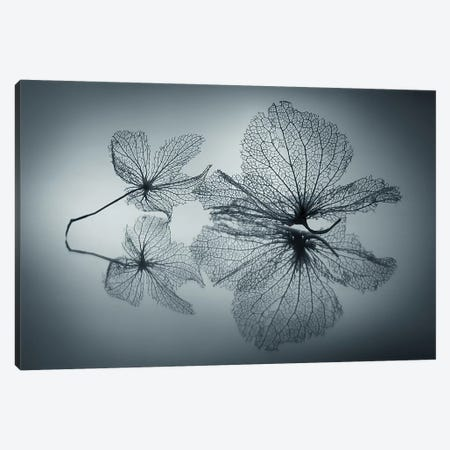Ephemeral Beauty Canvas Print #OXM4426} by Shihya Kowatari Canvas Art Print