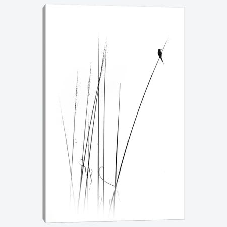 A Sabbatical Canvas Print #OXM4433} by Swapnil. Canvas Art Print