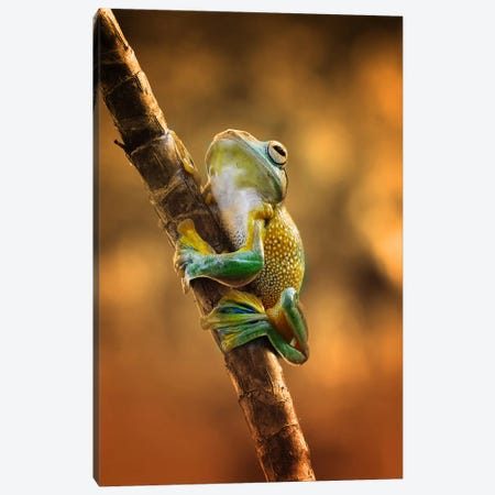 Climb Canvas Print #OXM443} by Ridha Canvas Wall Art