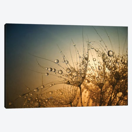 Tender Is The Night Canvas Print #OXM4454} by Dimitar Lazarov Canvas Artwork