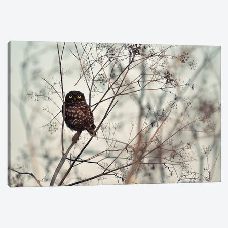 Look At Me! Canvas Print #OXM4456} by Emilian Avramescu Canvas Art