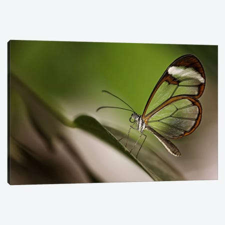 Greta Oto Canvas Print #OXM446} by Dennis Mohrmann Canvas Print