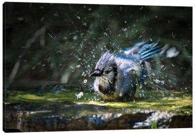 Splash! Canvas Art Print