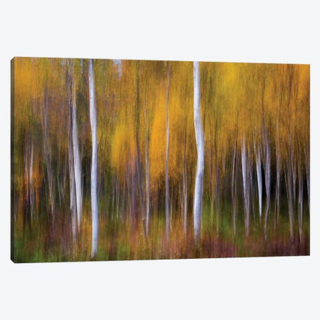 Abstract Fall Canvas Print #OXM4481} by Andreas Christensen Canvas Artwork