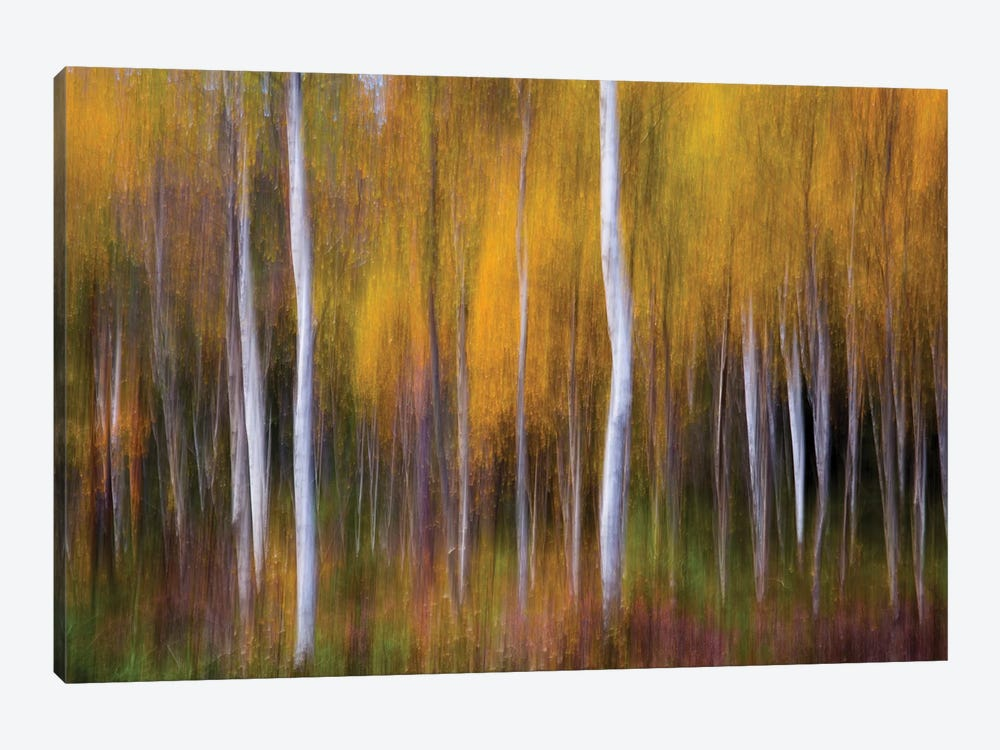 Abstract Fall by Andreas Christensen 1-piece Canvas Print