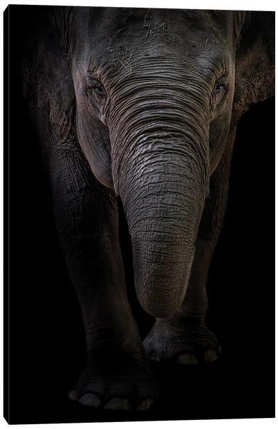 Dumbo Canvas Art Print