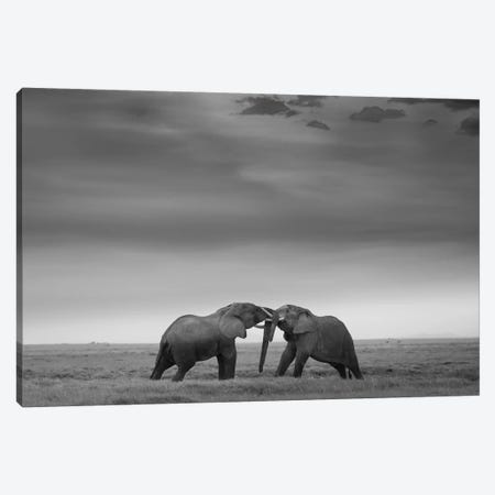 Mock Fight Canvas Print #OXM4494} by Cknara Canvas Art