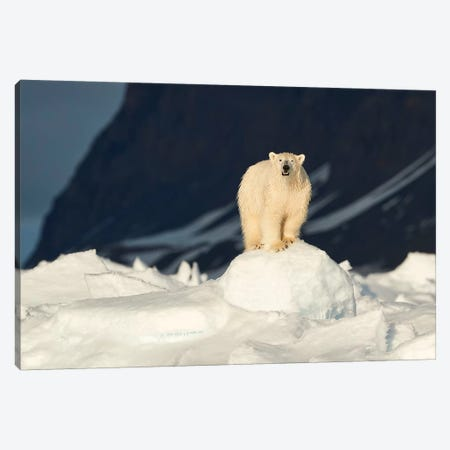 The Most Iconic Figure Of The Arctic Canvas Print #OXM4502} by Fokion Zissiadis Canvas Art Print