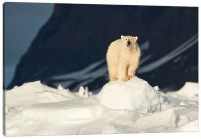 The Most Iconic Figure Of The Arctic Canvas Art Print