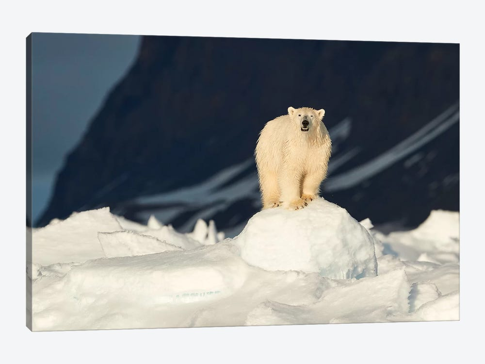 The Most Iconic Figure Of The Arctic by Fokion Zissiadis 1-piece Canvas Print