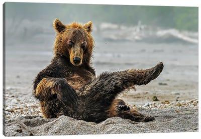 Sexi Bear Canvas Art Print