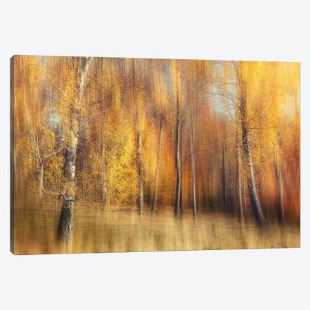 Autumn Birches Canvas Print #OXM4508} by Gustav Davidsson Canvas Print