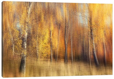 Autumn Birches Canvas Art Print