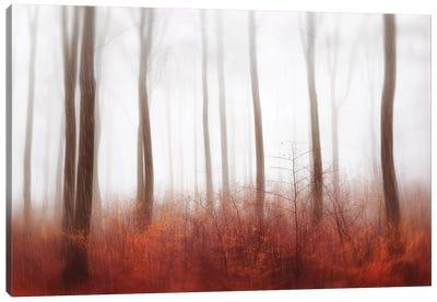 Endless Woods Canvas Art Print
