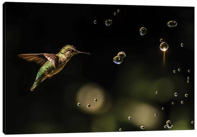 Play With Water Drops Canvas Art Print