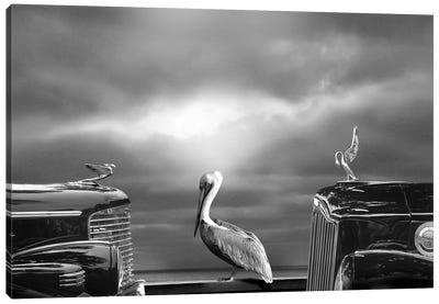 Comtemplating The Pelican Canvas Art Print
